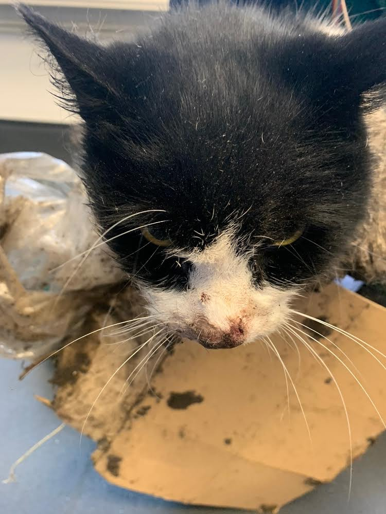 RSPCA issues warning over 'cruel' glue traps after caught cat dies