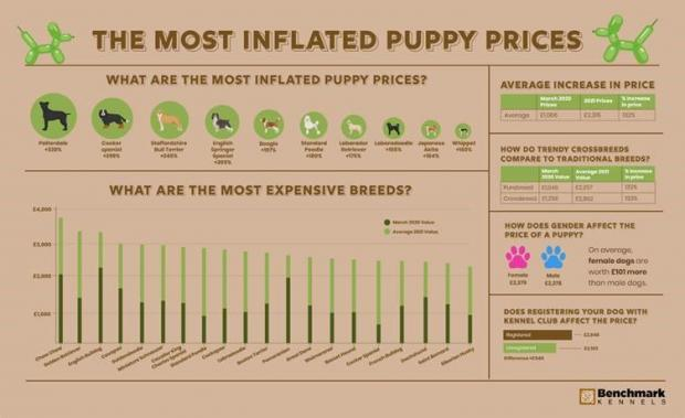 Times Series: The most inflated puppy prices. (Benchmark Kennels)