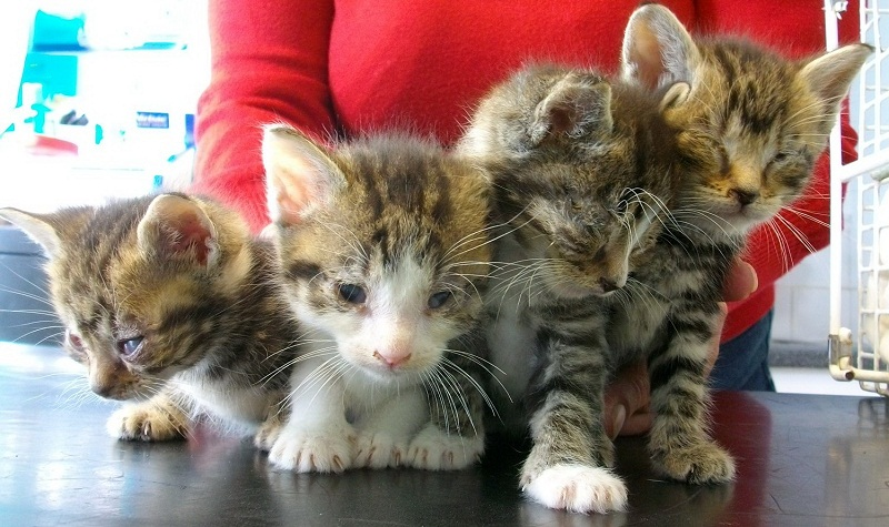 All of the money raised at the branch will go to protecting cats in Hendon, Finchley and Mill Hill