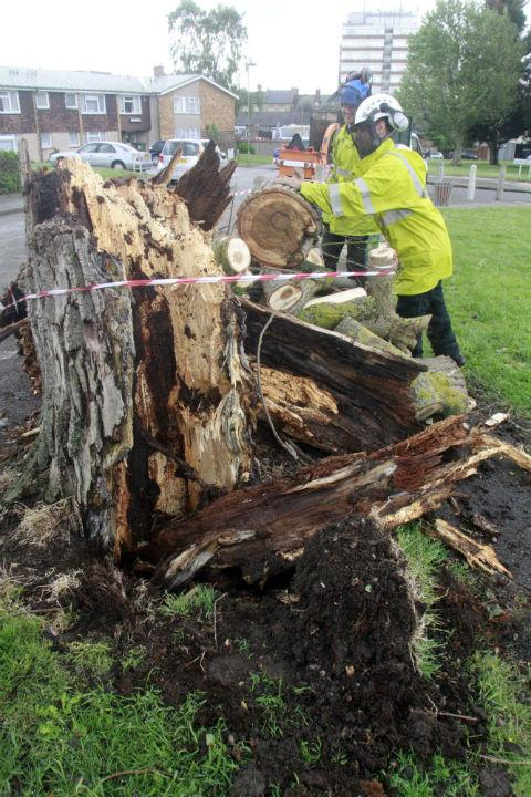 A large willow tree damaged two cars in New Brent Street, Hendon