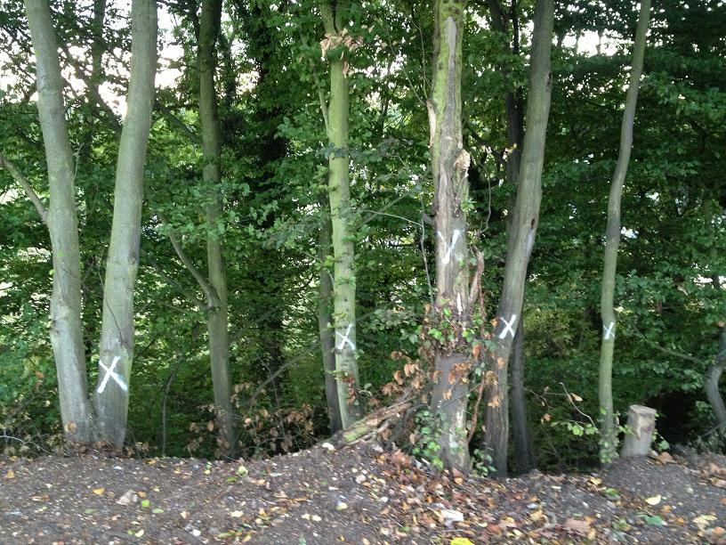 More trees at the site are marked for destruction