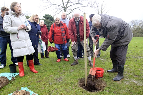 Finchley Church End Councillor Graham Old planted the first of six trees on a rainy afternoon on Monday