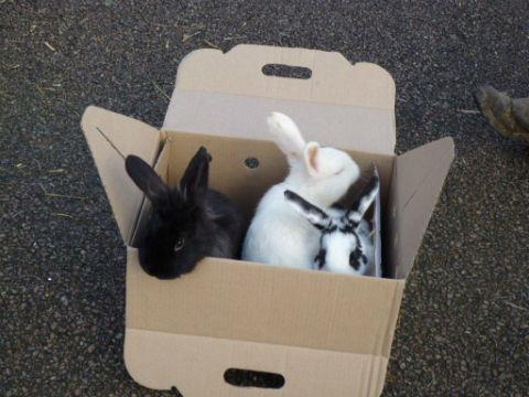 Rabbits found in a box at the side of the road