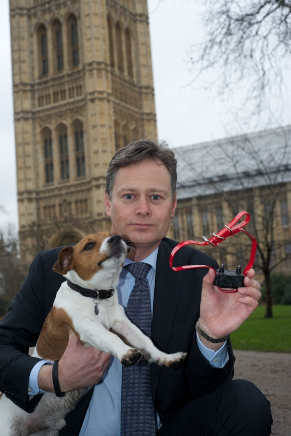 MP calls for ban on electric shock collars in dogs