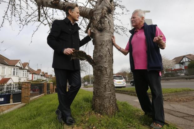 Daniel McGannan (right) met with Hendon MP Matthew Offord to show him the trees, which he says do not need chopping down