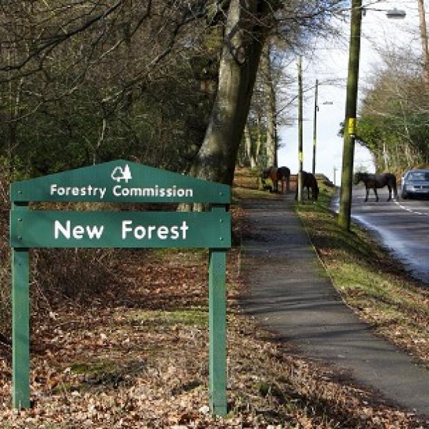 Times Series: The Wiggle New Forest Spring Sportive cycle took a route through the national park