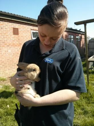 Animal care assistant Kerry Barnes with one of the bunnies