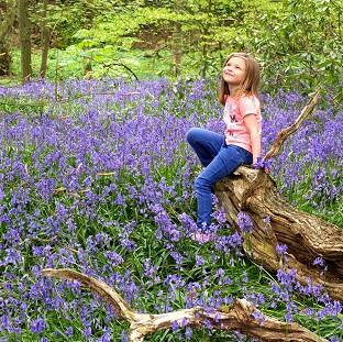 Times Series: Kadie Lane, five, plays amongst the bluebells in Witton Country Park, Blackburn, Lancashire