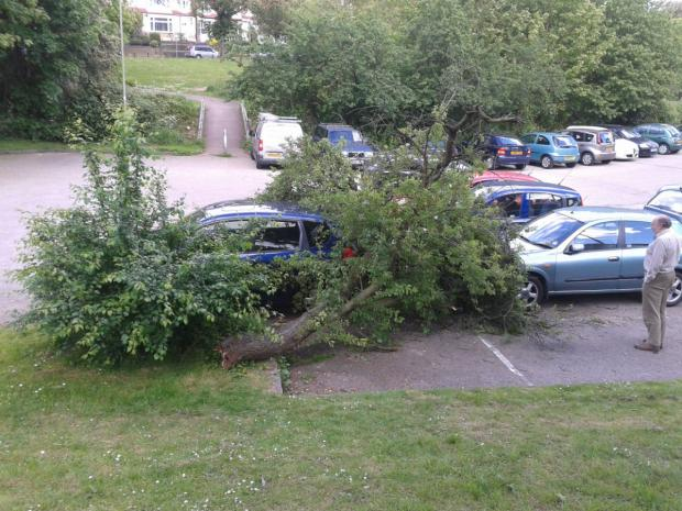 The tree fell on top of three parked cars in Church Hill Road car park.