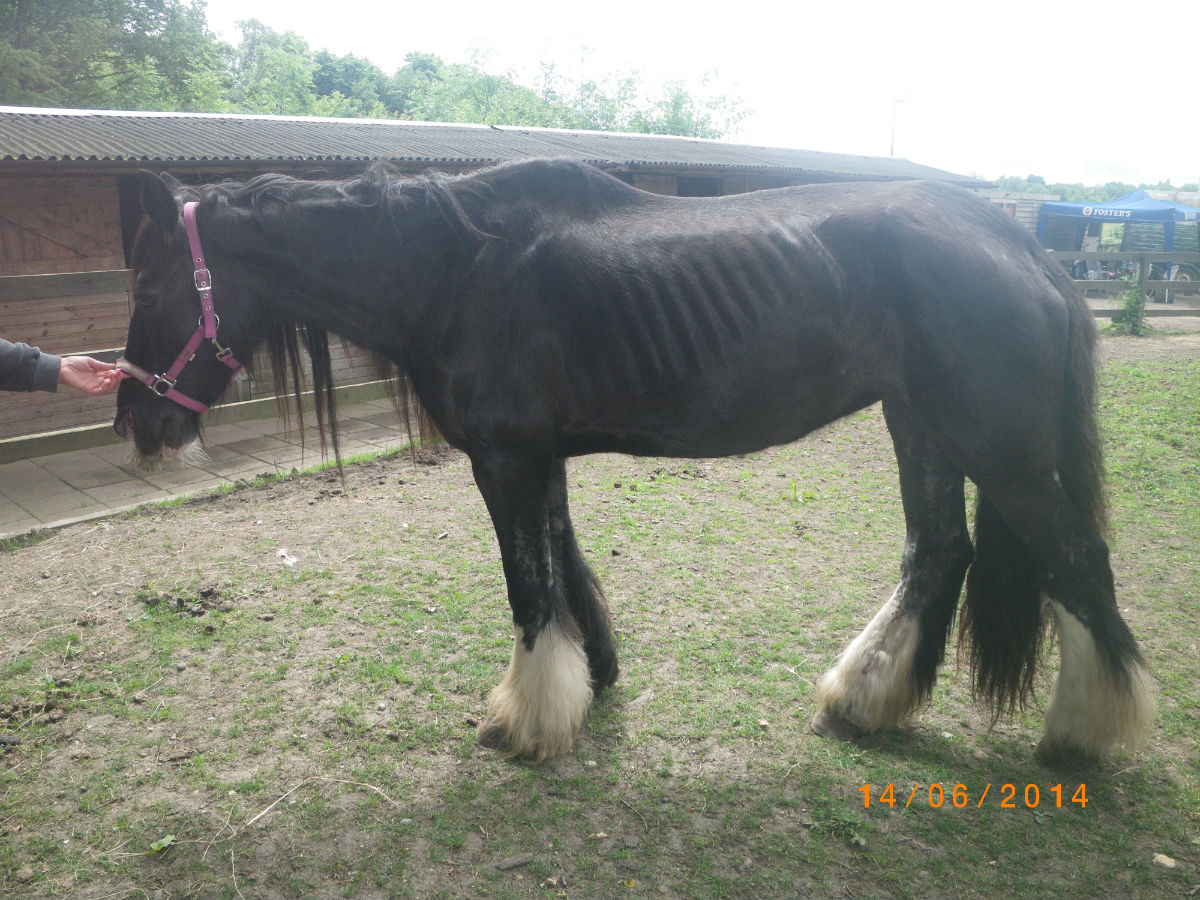 A vet found the elderly horse was in such a critical state, it had to be put down.