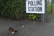 One cat went to vote